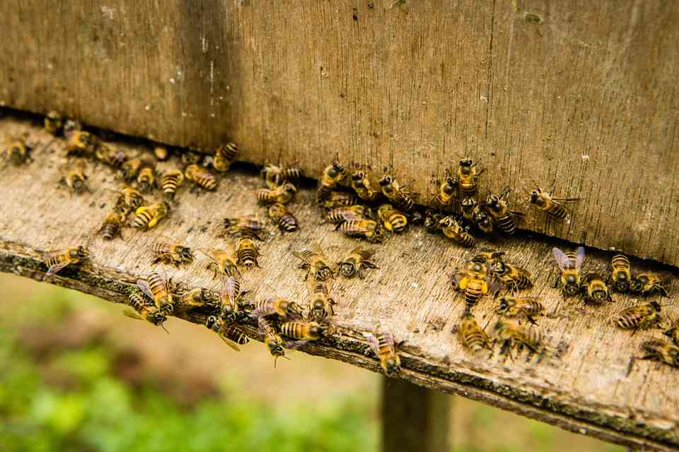"Critical Analysis ""The Arrival of Bee Box"" 
